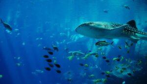 Aquatic Resources