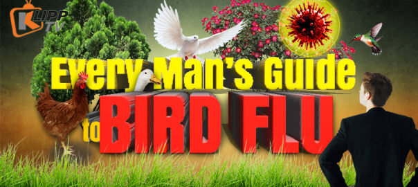 Every Mans Guide to Bird Flu