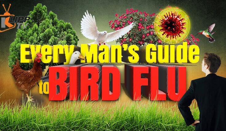 Every Mans Guide to Bird Flu